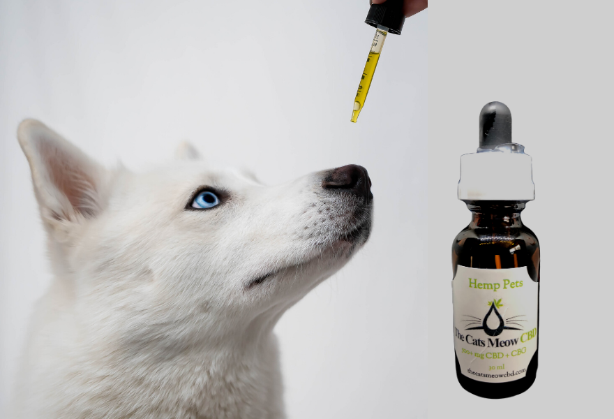 CBD for dogs (1)